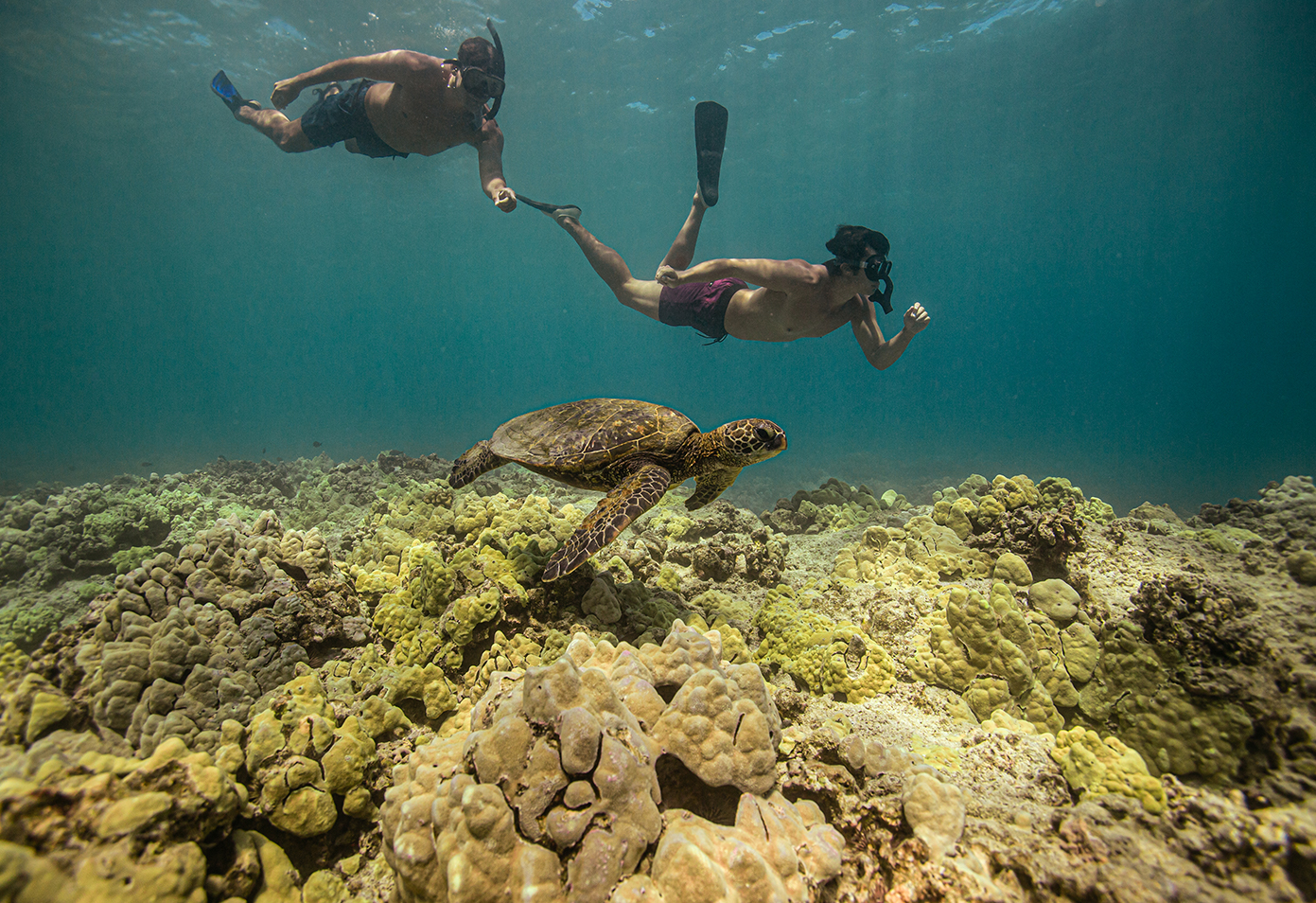 snorkeling with turtles at Fairmont Orchid, Hawaii
