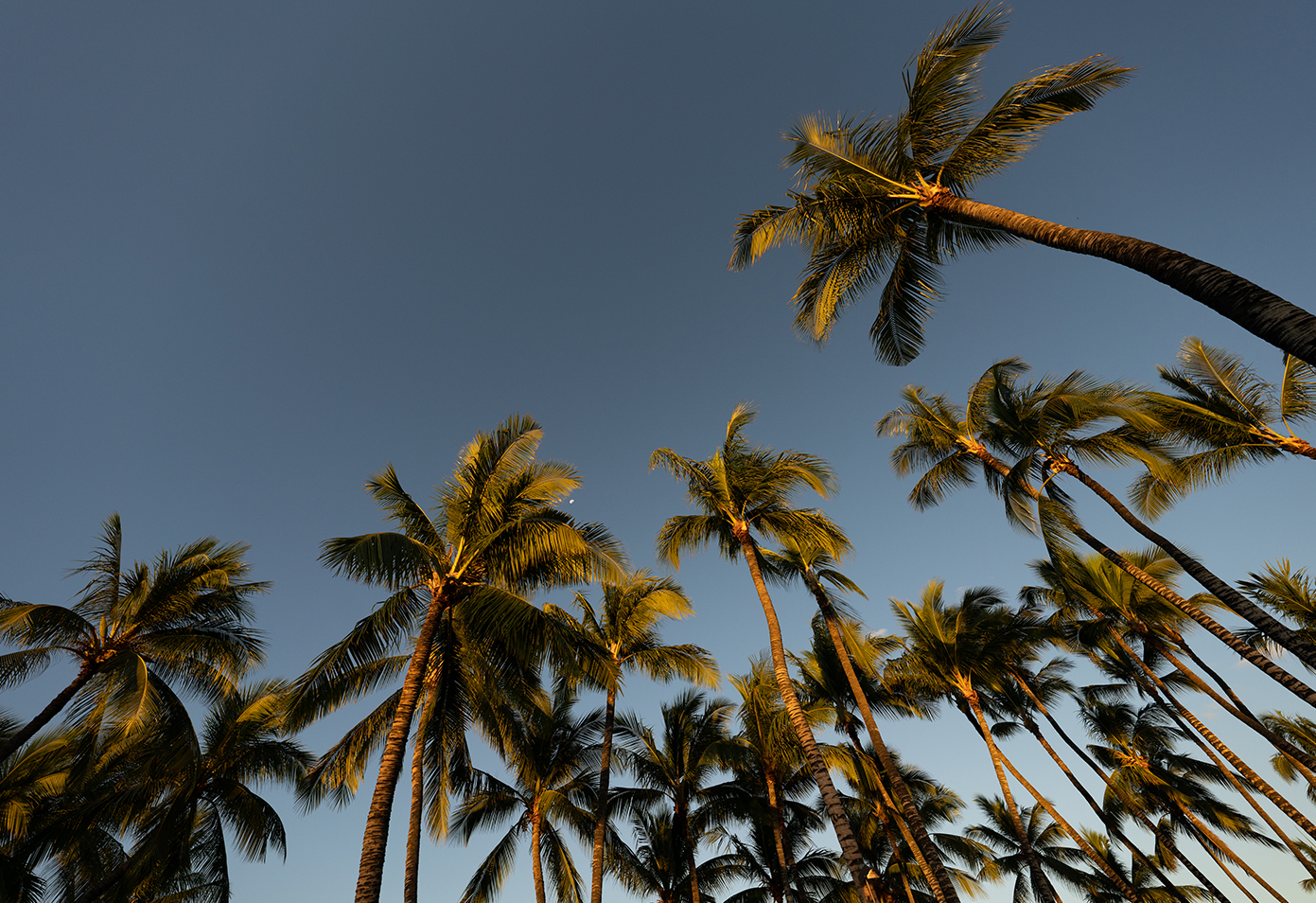 Palm trees at Fairmont Orchid, Hawaii